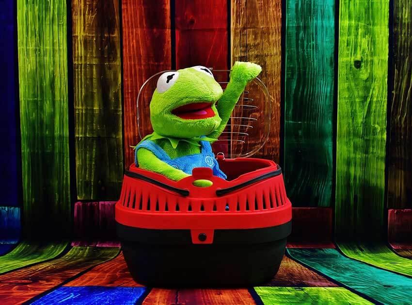 Auch Kermit fühlt sich in einer Transportbox wohl, denn das zeigt dieses Bild