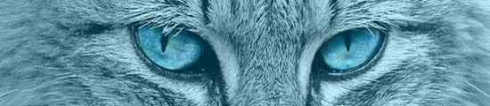 Blaue Augen einer grauen Katze in Großaufnahme bei transportbox-kaufen.de