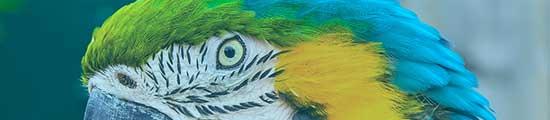 Der Teil des Kopfes eines Papageien in Nahaufnahme bei transportbox-kaufen.de