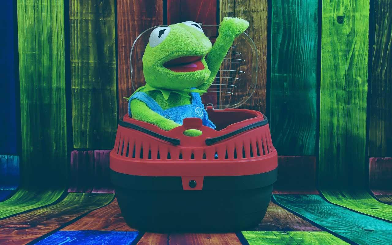 Auch Kermit fühlt sich in einer Trixie Transportbox wohl.