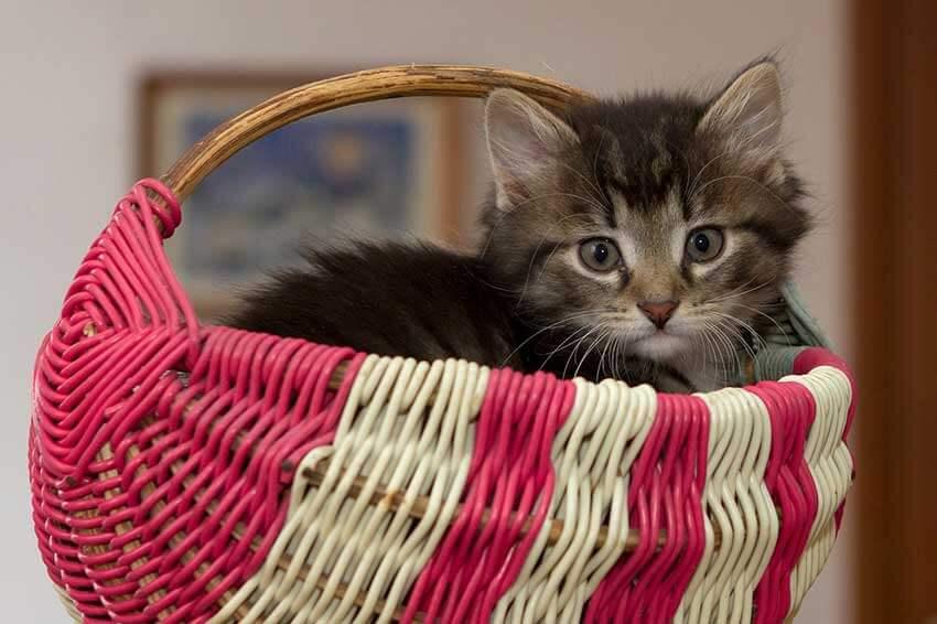 Ein süßes kleines Kätzchen in einem Weidenkörbchen
