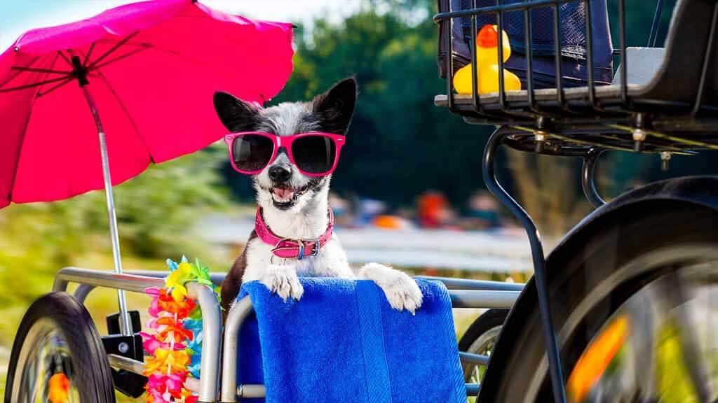 Hundeanhänger Transportbox Kaufende